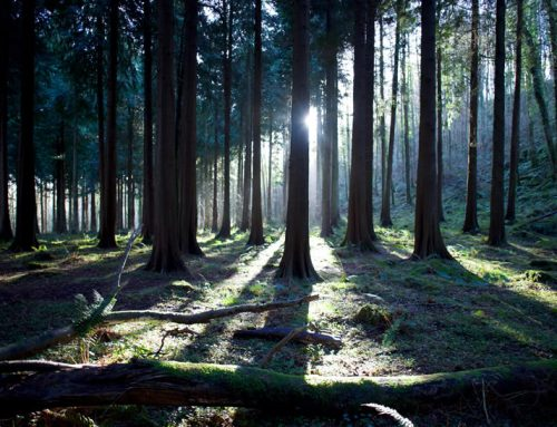 CARBWARE – Development of the Irish Forest carbon sequestration inventory and reporting system