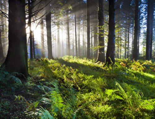 EU LULUCF REGULATION – National Forest Management Plan